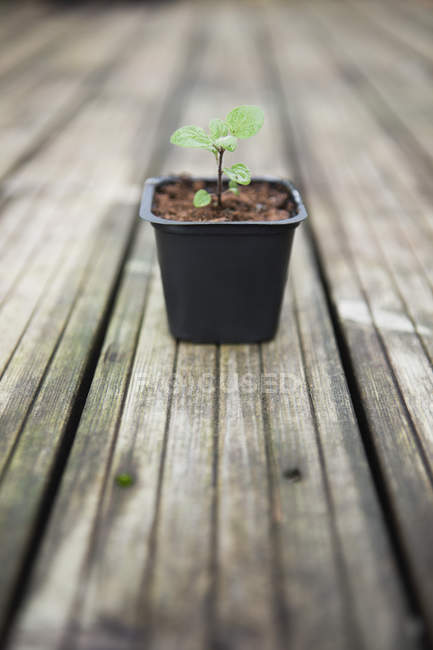 Primo piano di piccola pianta in vaso sulla superficie di legno — Foto stock