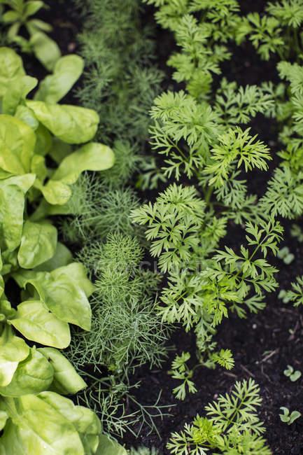 Colpo di telaio completo di piante verdi su letti — Foto stock