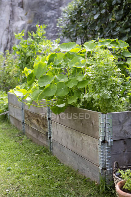 Plants growing in wooden crates at vegetable garden — Stock Photo