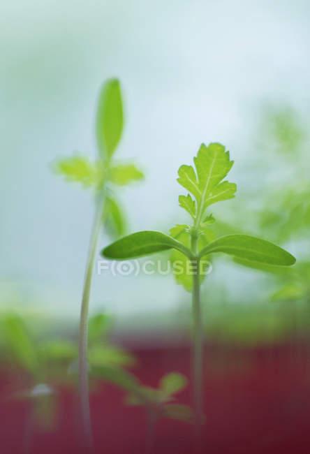 Селективная направленность небольших зеленых растений — стоковое фото