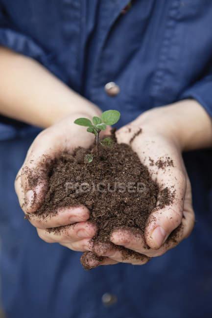 Nahaufnahme von weiblichen Händen mit Grünpflanze im Boden — Stockfoto