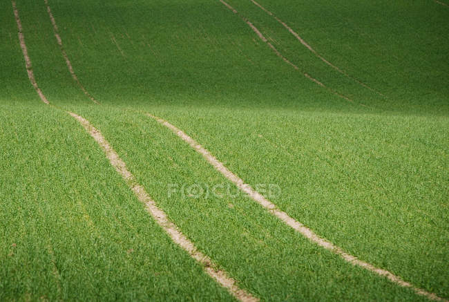 View of shadow on green field at sunny day — Stock Photo