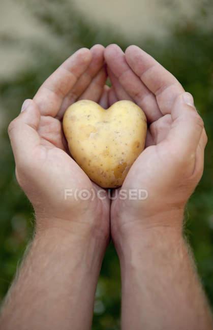 Tiro parcial de homem segurando coração de batata na mão — Fotografia de Stock
