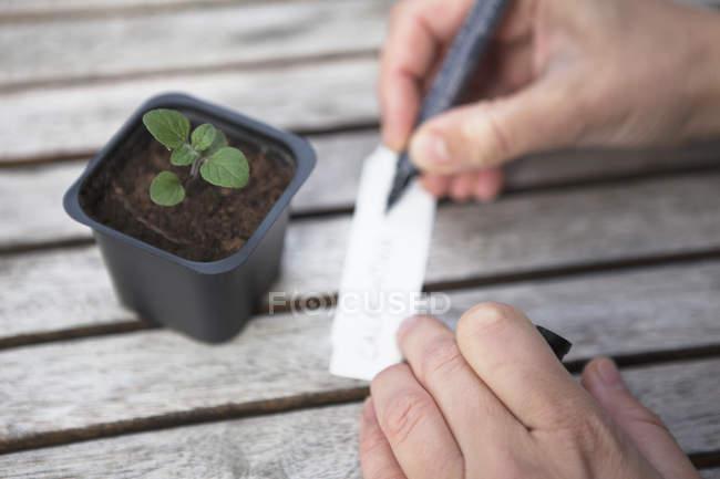 Mann, die Namen der Pflanze auf Preisschild zu schreiben — Stockfoto