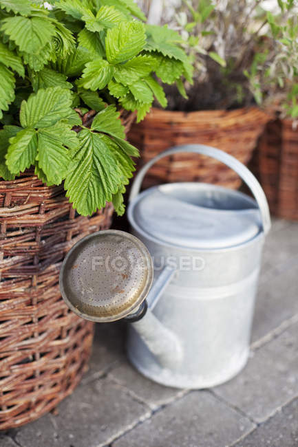 Metal Watering can near wicker pots with plants — Stock Photo