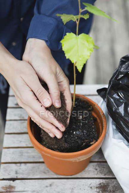 Visão de alto ângulo de mãos humanas derramando solo em vaso de flores — Fotografia de Stock