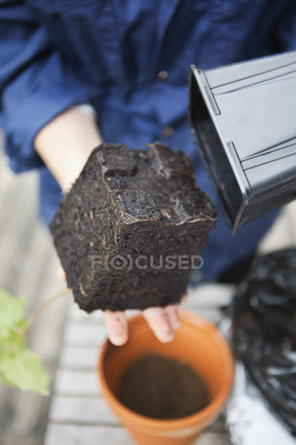 Woman removed plant seedling from plastic flowerpot — Stock Photo
