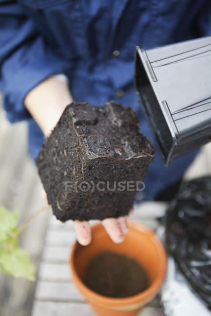 Жінка видалені завод розсади від пластикових вазон — стокове фото
