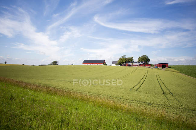 Tranquil view of green field and farmhouse against cloudy sky — Stock Photo
