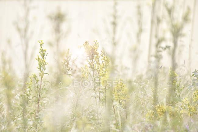 Зменшеному вигляді польових квітів з розмитість фону — стокове фото