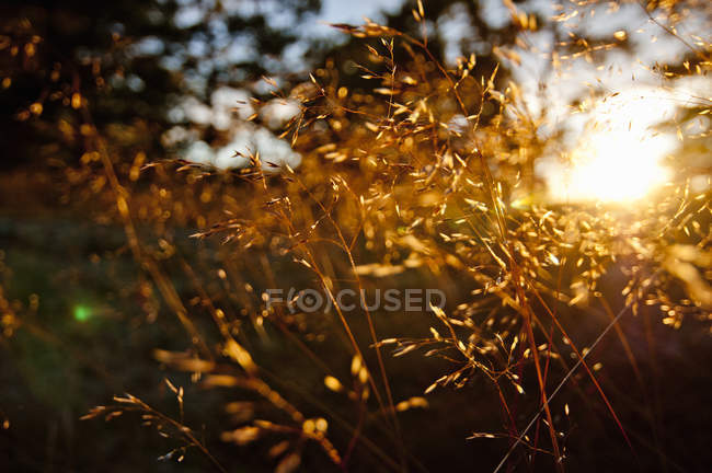 Selective focus of sunlight falling on plants — Stock Photo