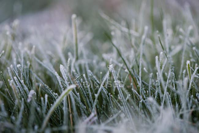 Крупным планом с белым инеем морозным травы — стоковое фото