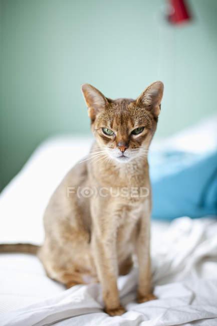 Kitten sitting on bed in bedroom — Stock Photo