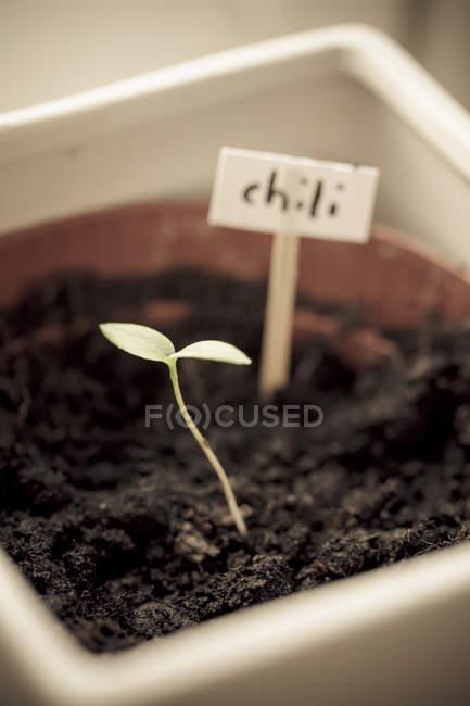 Close-up de pequena planta em vaso e placa de identificação na caixa de plástico — Fotografia de Stock