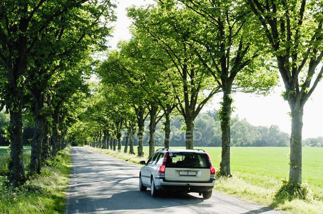 Rückansicht des Auto unterwegs zwischen Baumreihen verschieben — Stockfoto