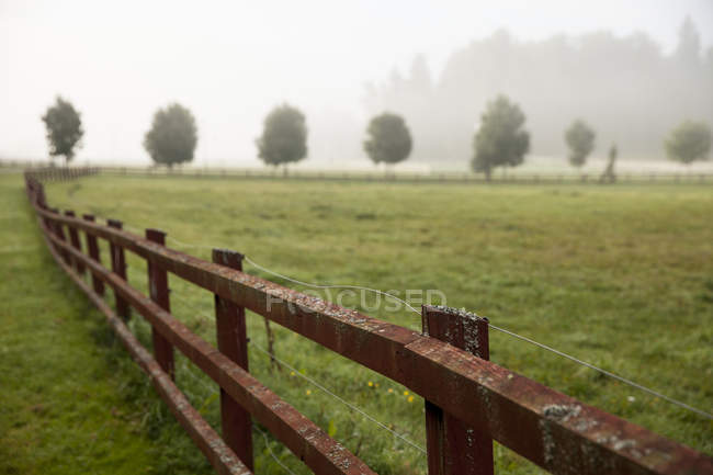 Wooden fence in field with row of trees and fog at background — Stock Photo