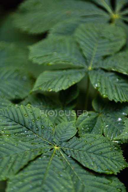 Vista full frame di foglie verdi con gocce d'acqua — Foto stock