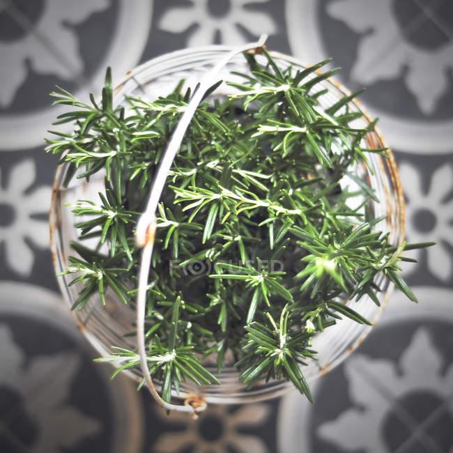 Vista superiore della pianta verde in cestino di vimini su pavimento decorativo — Foto stock