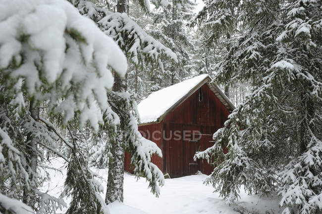 Wooden house among snow-covered fir trees — Stock Photo