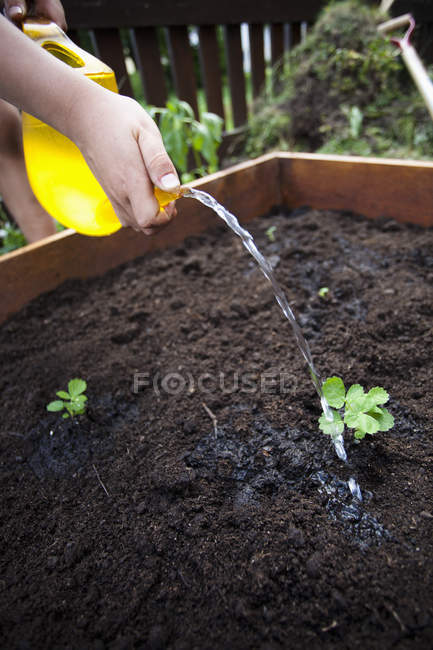 Cropped image of boy watering can over seedlings — Stock Photo