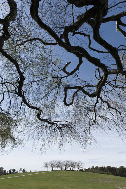 Low angle view of tree branches in city park — Stock Photo