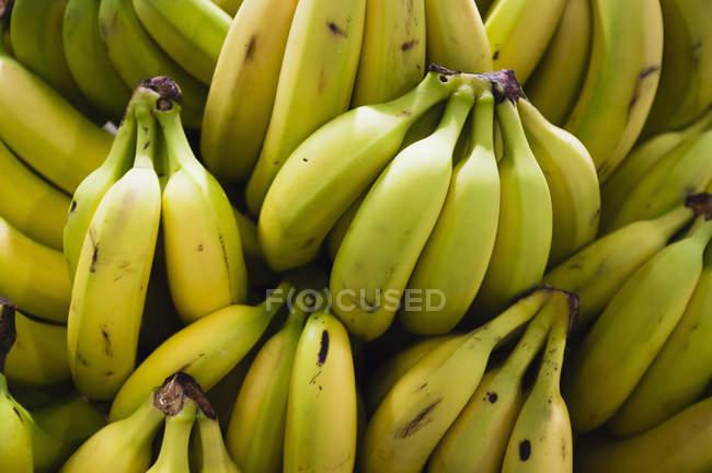 Перегляд повного кадру бананів гірлянди — стокове фото