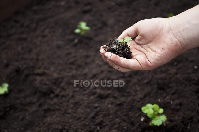 Close-up of child hand holding green plant in soil — Stock Photo
