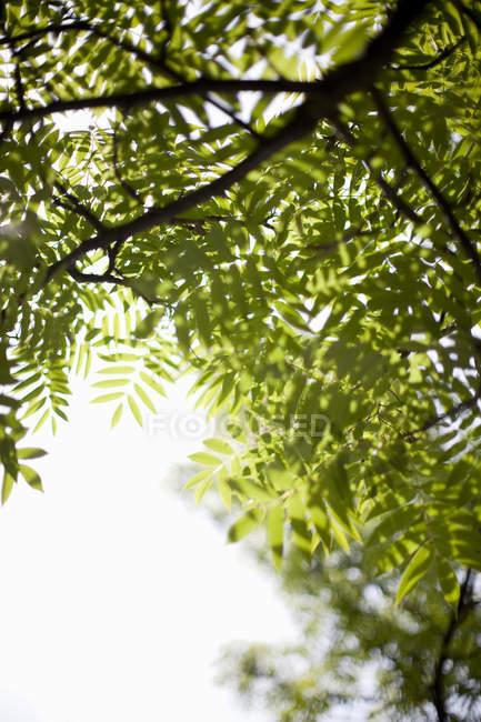 Vista de ângulo baixo de árvore com a luz do sol — Fotografia de Stock