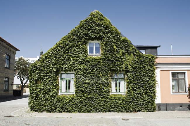 L'edera ha coperto la casa in città contro il cielo blu chiaro — Foto stock