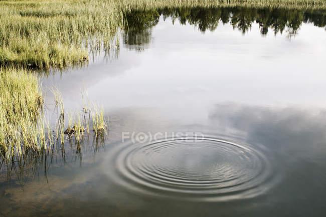 Vista ad alto angolo della palude increspata — Foto stock
