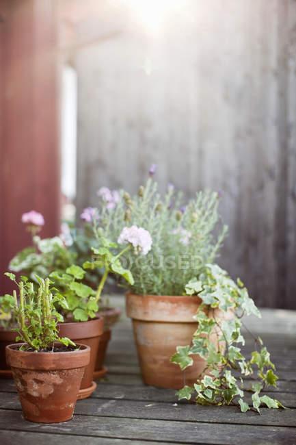 Vista di vasi da fiori di argilla nel cortile di casa di legno — Foto stock