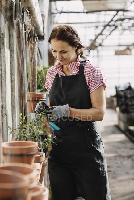 Female gardener wearing apron and checking potted plants in greenhouse — Stock Photo