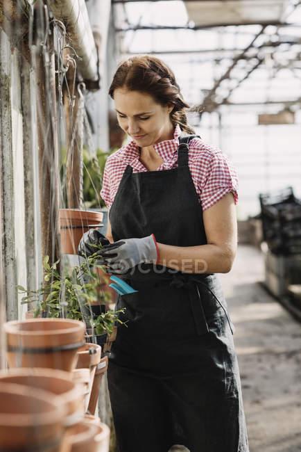 Giardiniere femminile che indossa il grembire e controlla le piante in vaso in serra — Foto stock