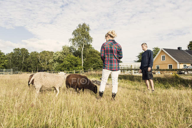 Man and woman looking at sheep while standing on grassy field in farm — Stock Photo