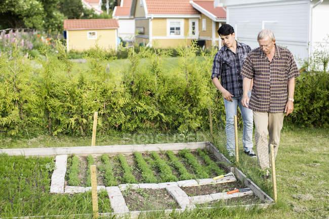 Comprimento cheio de avô e neto analisando plantas na jarda — Fotografia de Stock