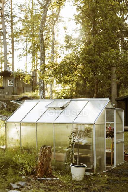 Pianta in vaso fuori piccola serra in fattoria — Foto stock