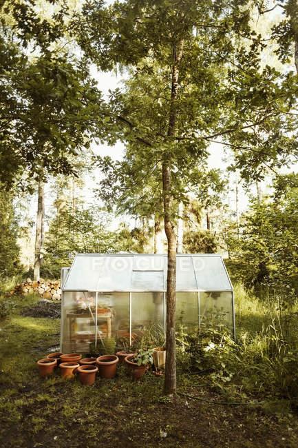 Piante in vaso fuori piccola serra in fattoria — Foto stock
