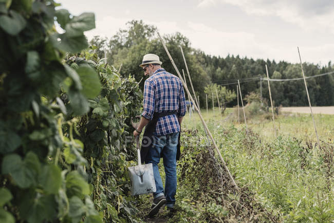 Jardinier mature tenant la pelle et marchant par des plantes sur le terrain — Photo de stock