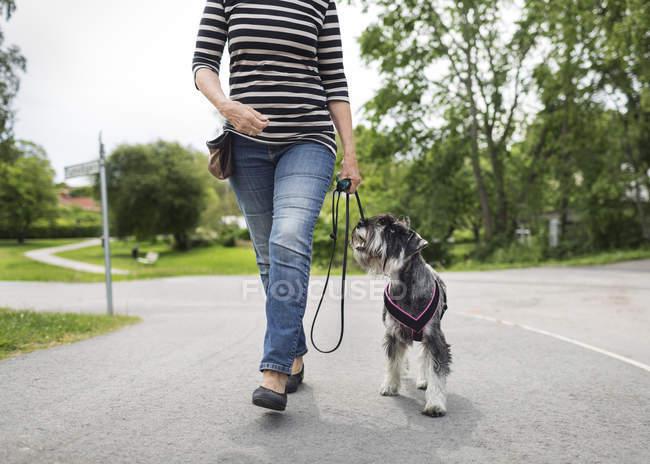 Sezione bassa della donna anziana che cammina con il cane sulla strada — Foto stock