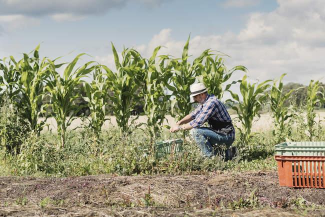 Mature jardinier agenouillé et travaillant à la ferme contre le ciel — Photo de stock