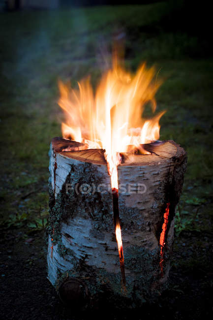 Fire burning in tree stump outdoors — Stock Photo