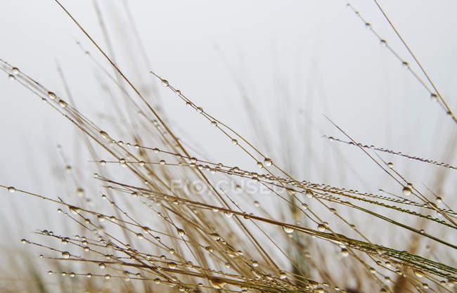 Vue de la macro d'eau tombe sur herbe sèche — Photo de stock