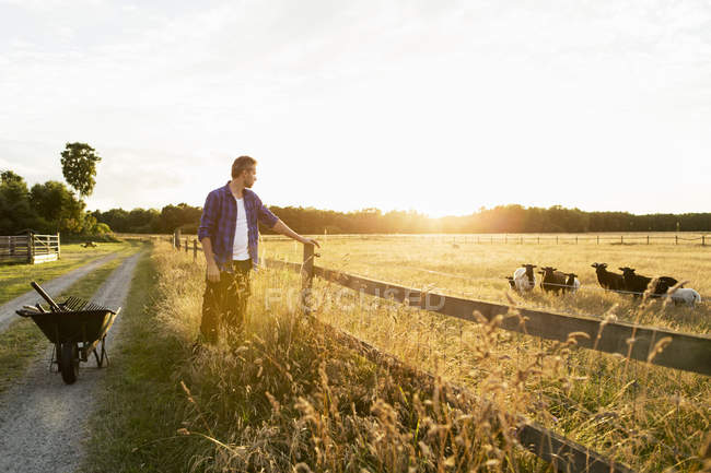 Farmer standing by fence looking at sheep on grassy field during sunny day — Stock Photo