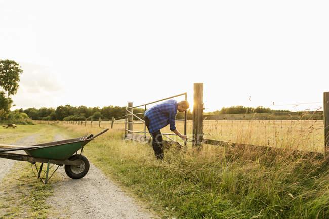 Homem examinando portão no campo gramado contra céu limpo na fazenda — Fotografia de Stock