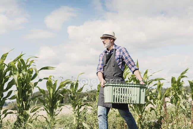 Vue à angle bas du jardinier mature portant la caisse à la ferme contre le ciel — Photo de stock