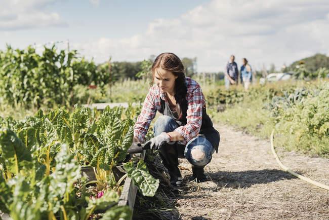 Jardinière accroupie et plantation à la ferme — Photo de stock