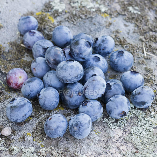 Group of blueberries on stone — Stock Photo