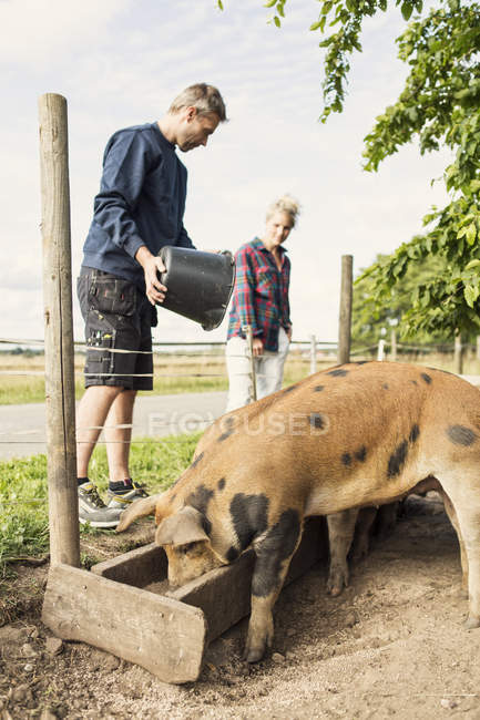 Low angle view of man and woman feeding pigs at farm — Stock Photo