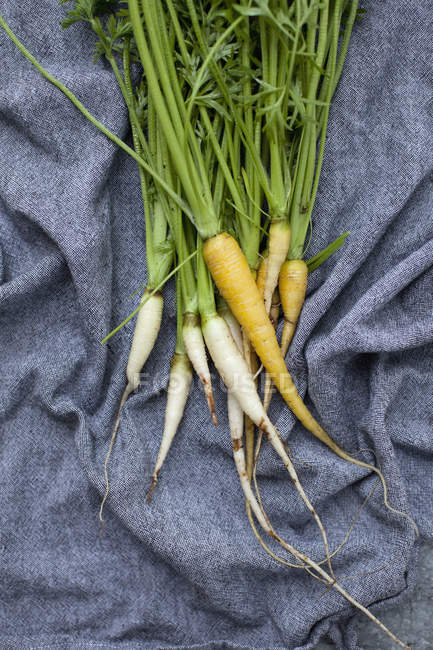 Морква і редис на тканині — стокове фото