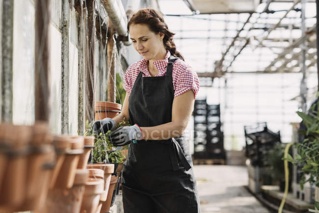 Woman checking leaves growing on potted plant in greenhouse — Stock Photo